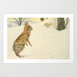 Fuertes, Louis Agassiz (1874-1927) - Wild Animals of North America 1918 (Cottontail Rabbit) Art Print