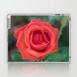 Red Rose Close Up Laptop & iPad Skin