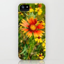 Indian Blanket Wildflowers III iPhone Case
