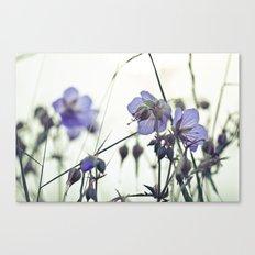 Sunlit meadow Crane's-bill Canvas Print