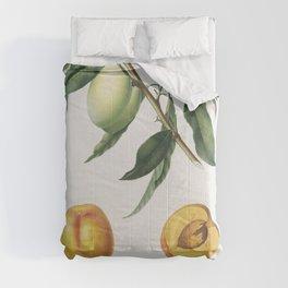 Apricot (Pesca Natalina) from Pomona Italiana (1817 - 1839) by Giorgio Gallesio (1772-1839) Comforters