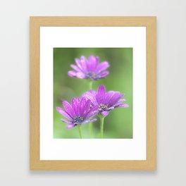 Comos Flowers Framed Art Print