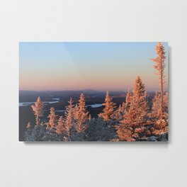 Alpine Spruce Trees, Adirondacks Metal Print