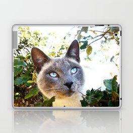 Siamese Cat in Tree Laptop & iPad Skin