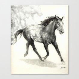 Appaloosa Stallion Canvas Print