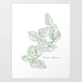 Monstera Adansonii houseplant hand-drawn art Art Print