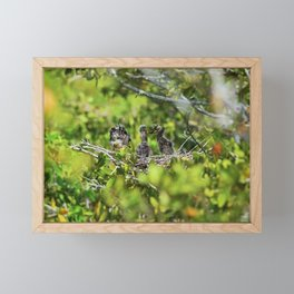 Yellow-crowned Night Heron Babies I Framed Mini Art Print