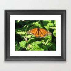 Resting Butterfly Framed Art Print