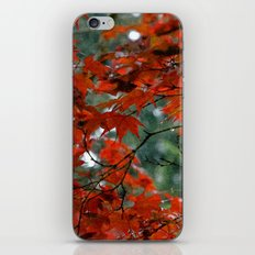 Red Tree on a Fall Morning iPhone & iPod Skin
