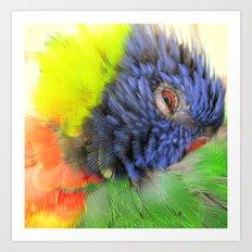 Lorikeet Color Wheel Art Print