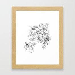 Orange tree branch - botanical illustration Framed Art Print