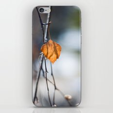 Last Leaf of Winter iPhone & iPod Skin
