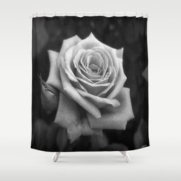 Pink Roses in Anzures 4 B&W Shower Curtain