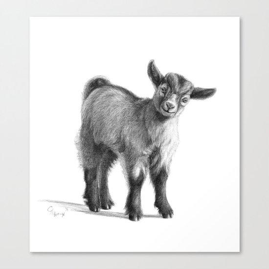 Goat baby G097 Canvas Print