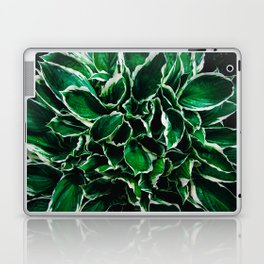 Hosta undulata albomarginata vibrant green plant leaves Laptop & iPad Skin