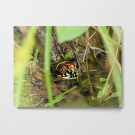 Box Turtle and Tadpoles Metal Print