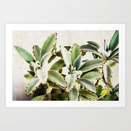 cactus leaves Art Print