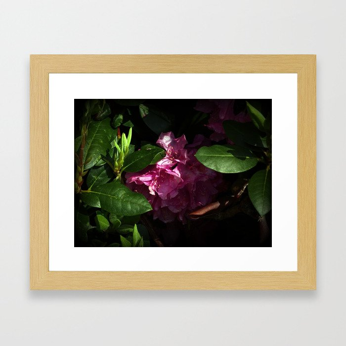 Shy Rhododendron Framed Art Print