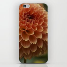 Orange Dahlia iPhone Skin