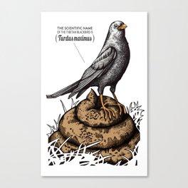 TURDUS MAXIMUS Canvas Print