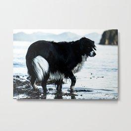 Alaskan Dog Metal Print