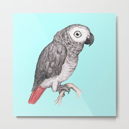Cute African grey parrot Metal Print