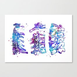Cervical Thoracic Lumbar Vertebrae Spine Colorful Watercolor Gift Canvas Print