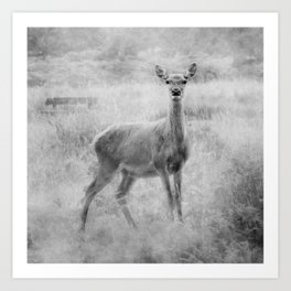 Doe A Deer A Female Deer, In Mono Art Print