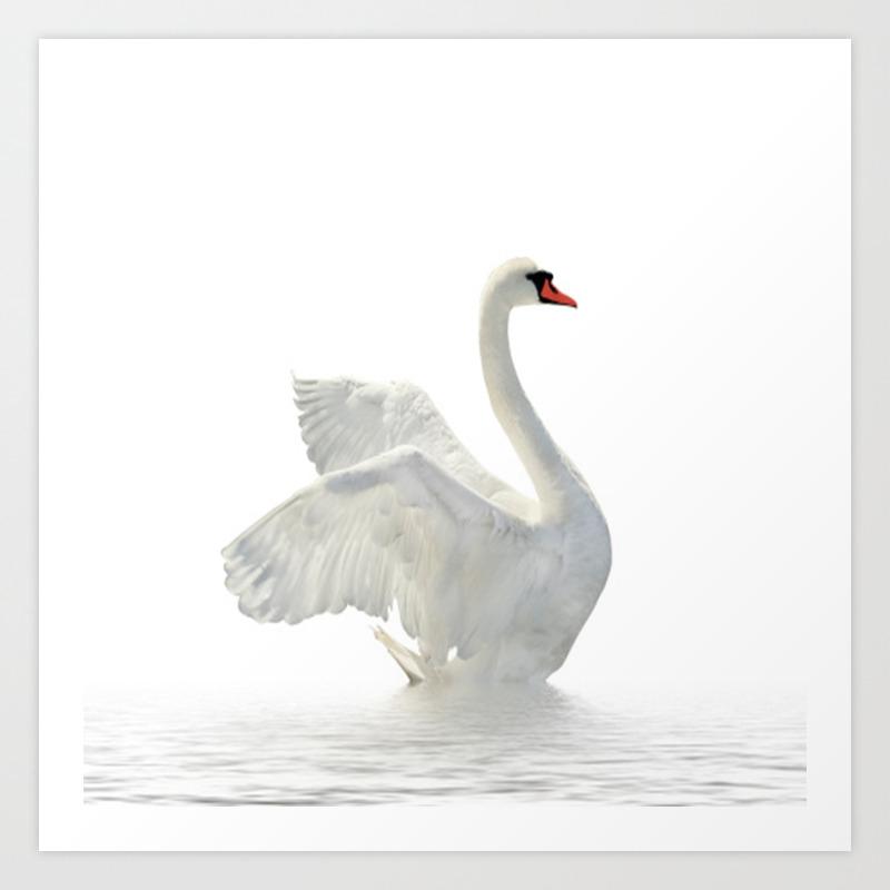 drawing-elegant-swan-at-home