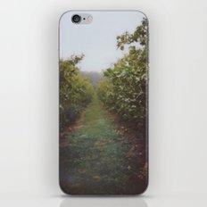 Orchard Row iPhone Skin