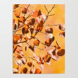 Fall - 12 Poster