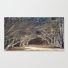 The Woods Hold Both the Light and the Darkness Canvas Print