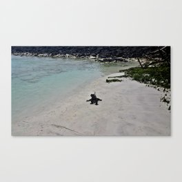 Iguana on The Galapagos Canvas Print