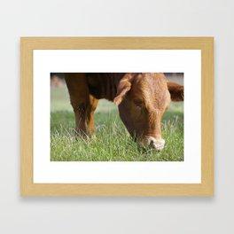 Ellen Grazing @ Happy Hooves Farm Sanctuary Australia Framed Art Print