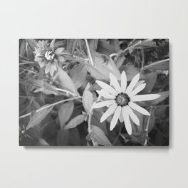 Black-eyed Susan 1 Black and White jjhelene Metal Print