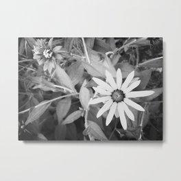 Black-eyed Susan 1 Black and White jjhelene Metal Print