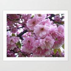 Pink Blossom Art Print