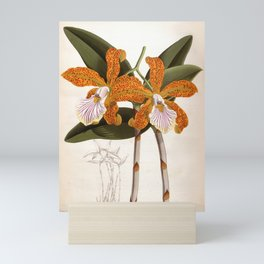 Cattleya Velutina Vintage Lindenia Orchid Mini Art Print