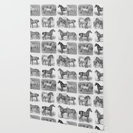 A Collection Of Antique Horse Portraits Wallpaper