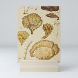 Naturalist Mushrooms Mini Art Print