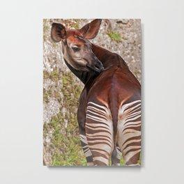 Okapi Metal Print