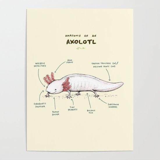 Anatomy of an Axolotl by sophiecorrigan