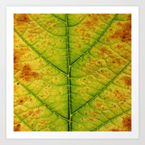 autumn leaf macro Art Print