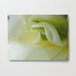 White Tulip by Teresa Thompson Metal Print