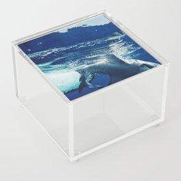 Shark Research Acrylic Box