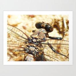 summer dragonfly IX Art Print