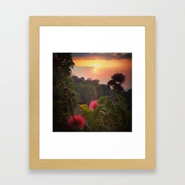 Pink Powder Puff at Sunset Framed Art Print