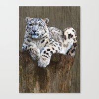 snow leopard Canvas Prints featuring  snow leopard by Doug McRae