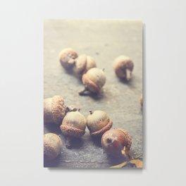 Autumn Acorns Metal Print