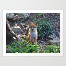 fox 2018-11 Art Print